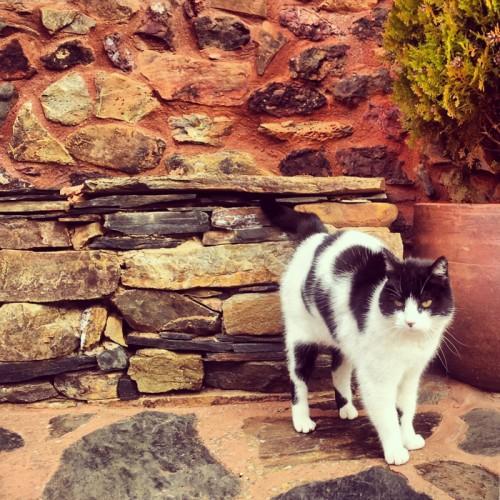 Gato en Madriguera